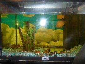 Fish Tank £55