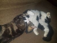 2 lovely cats looking for forever home