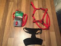 Small dog Harness's and lead