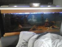 fish for sale . wanted gone as got othee ideas .