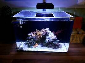 FULL MARINE SET UP WITH CLOWNFISH AND CORAL
