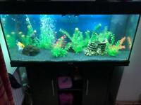 4ft tank with built in pump and fish included