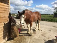 5 livery stables and grazing available on a peaceful family run farm in Rixton-with-Glazebrook