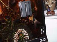 4 x Clown loaches for fish tank aquarium kof 8 to 13 cm