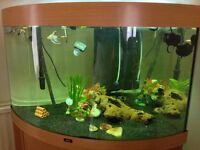 aquarium juwel trigon
