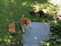 Four cutie kittens just waiting for a new home