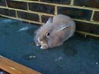 Free! Rabbit to a good home