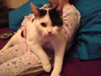 FREE TO GOOD HOME FEMALE 8MONTH OLD KITTEN