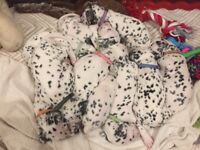 Dalmatian puppies 3 weeks old. 5 girls and 5 boys, puppies will be wormed and microchipped.
