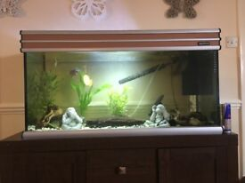 3ft Aqua vital fish tank with bog wood.