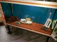 Fish tank 4 ft wide full set up