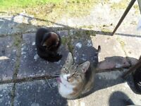 Buster and Lilly, cats looking for foster home for one year.