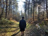 Experienced (And Insured) Dog Walker/Sitter Seeking New Dogs In/Around Chesham and Amersham Walking