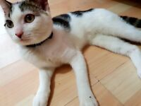 Kitten For Sale - 5 Months Old - Litter Trained - READY TO MOVE IN TO NEW HOME!