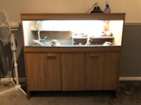 Bearded dragon with vivarium and cabinet
