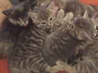 Baby kittens now looking for their future homes