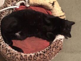 Missing black cat SWEEP
