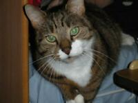 MISSING CAT - JARROW