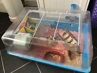 2 male dwarf hamsters, cage and accessories
