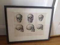 Framed vintage anatomy print
