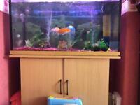 240 L Fish Tank