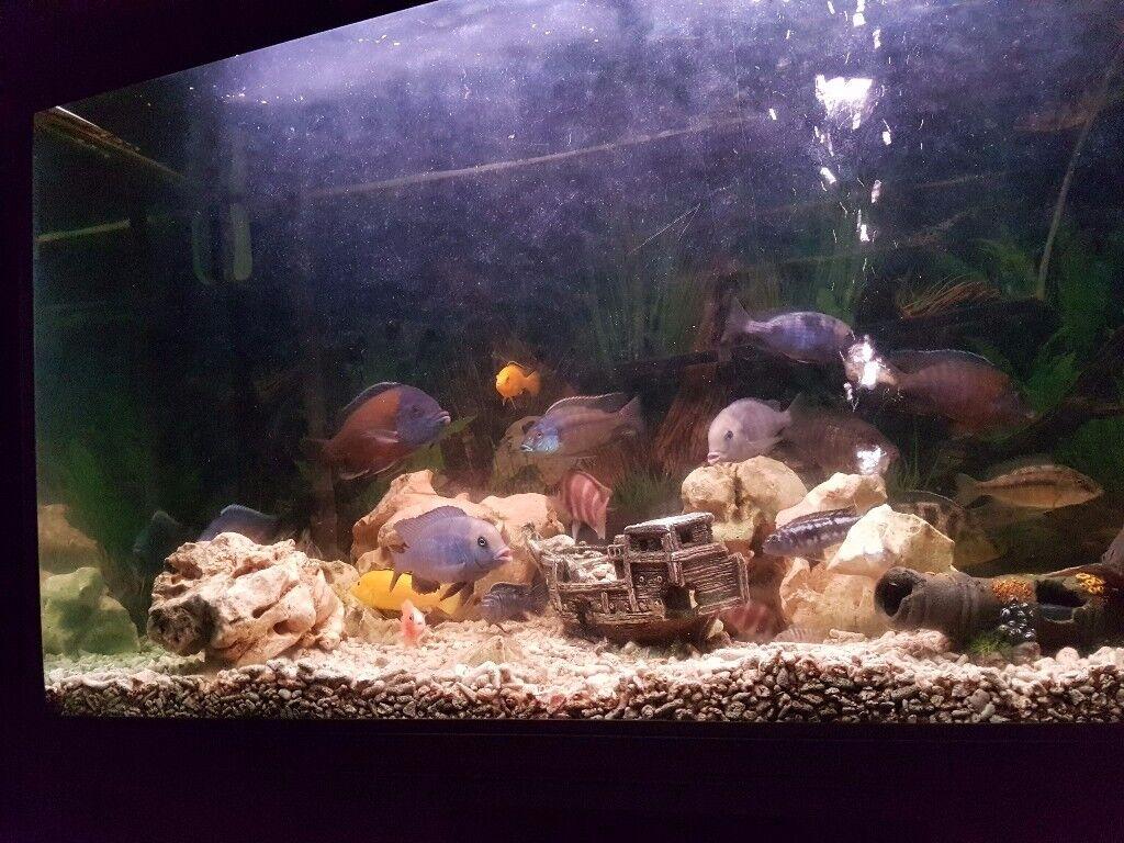 4 foot rena tank + fish
