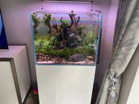 Fish tank Aquariums 4 life165ltr complete setup less than 3 months old mint.