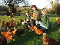 Hens for sale 4months old.