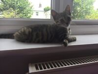 4 month old kitten for sale