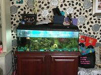 Tropical fish and tank