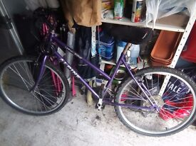 Alpine ladies bicycle with lock and gel saddle. 5 gears
