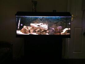 Aquarium for sale with accessories £200 O.N.O