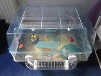 Male Syrian hamster and set up