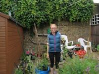 New gardener looking for light gardening/garden maintenance in the Teddington area