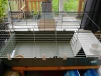 Rabbit / guinea cage