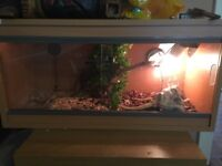 Clear seal vivarium