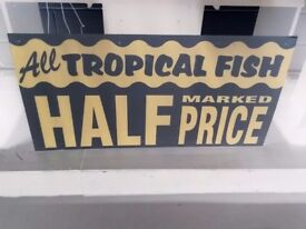 Special offer aquariums and half price tropical fish