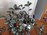 Indoor plant in ceramic pot