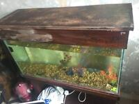 Large fish tank, With stand