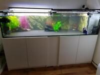 Fish 550l custom made plus cabinet and fish