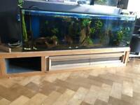 200 litre Aquarium - 5 foot (153cm) long