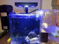 Marine fishes and tank