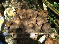 Seasoned Logs stack 2