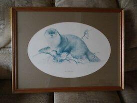 Otter, limited edition signed print by Noel Kirk