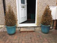 Teal Garden Terracotta Pots £30