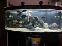 5FT Bow Front Aquarium