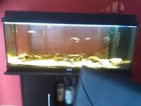 Jewell 120ltr Aquarium and Stand