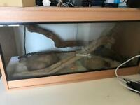 Corn Snake plus 3ft vivarium