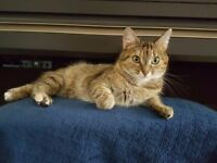 A very loved almost 3 years old cat (female, neutered) need to be re-homed