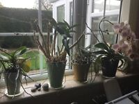 Selection of indoor plants for free. No pots, pick up only.